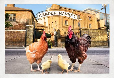 Chicken family at Camden Market gates